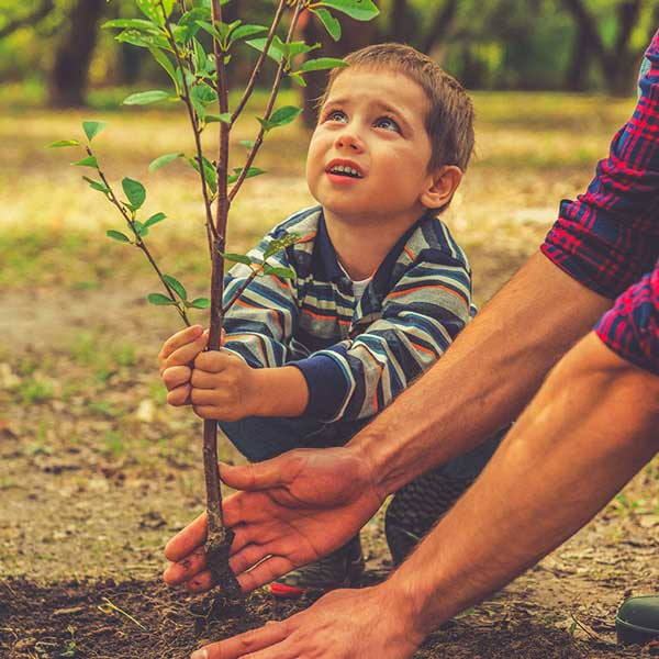 young boy planting a tree